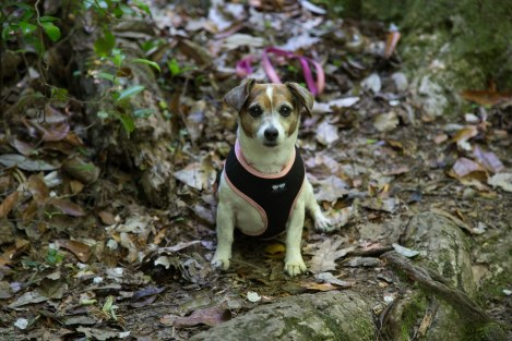 Dottie goes to Pine Mountain May 2016 travelwiththeslowskys