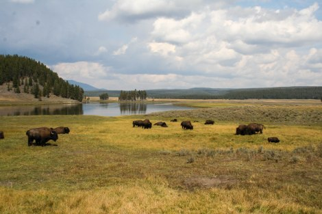 YellowstoneIMG_2615.jpg