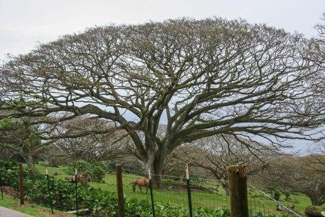 Tree1IMG_2780.jpg