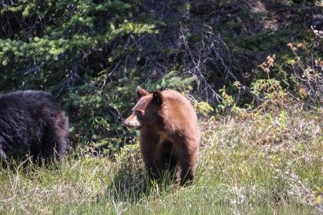 Bear5.jpg
