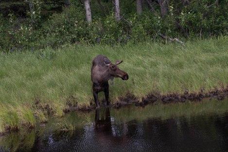 Wildlife1a.jpg
