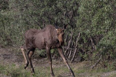 Wildlife1d.jpg