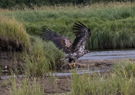 Eagle12.jpg